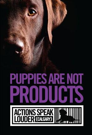 Actions Speak Louder Calgary - Take a stand against The Top Dog Store