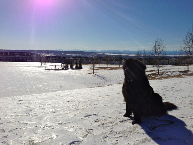 Moses, closer to home.  While the east was getting hammered by Nemo, Calgary was enjoying above-seasonal temperatures