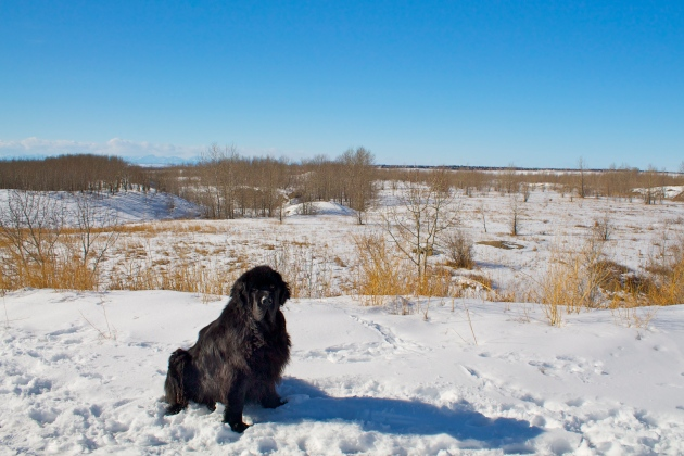 Moses at Nose Hill
