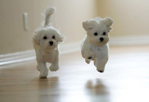Adorable! http://runningpuppies.tumblr.com/