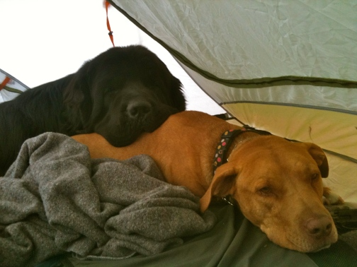 Moses relaxing with his pittie pal, Hooch on a camping trip. Not exactly a menacing pup.