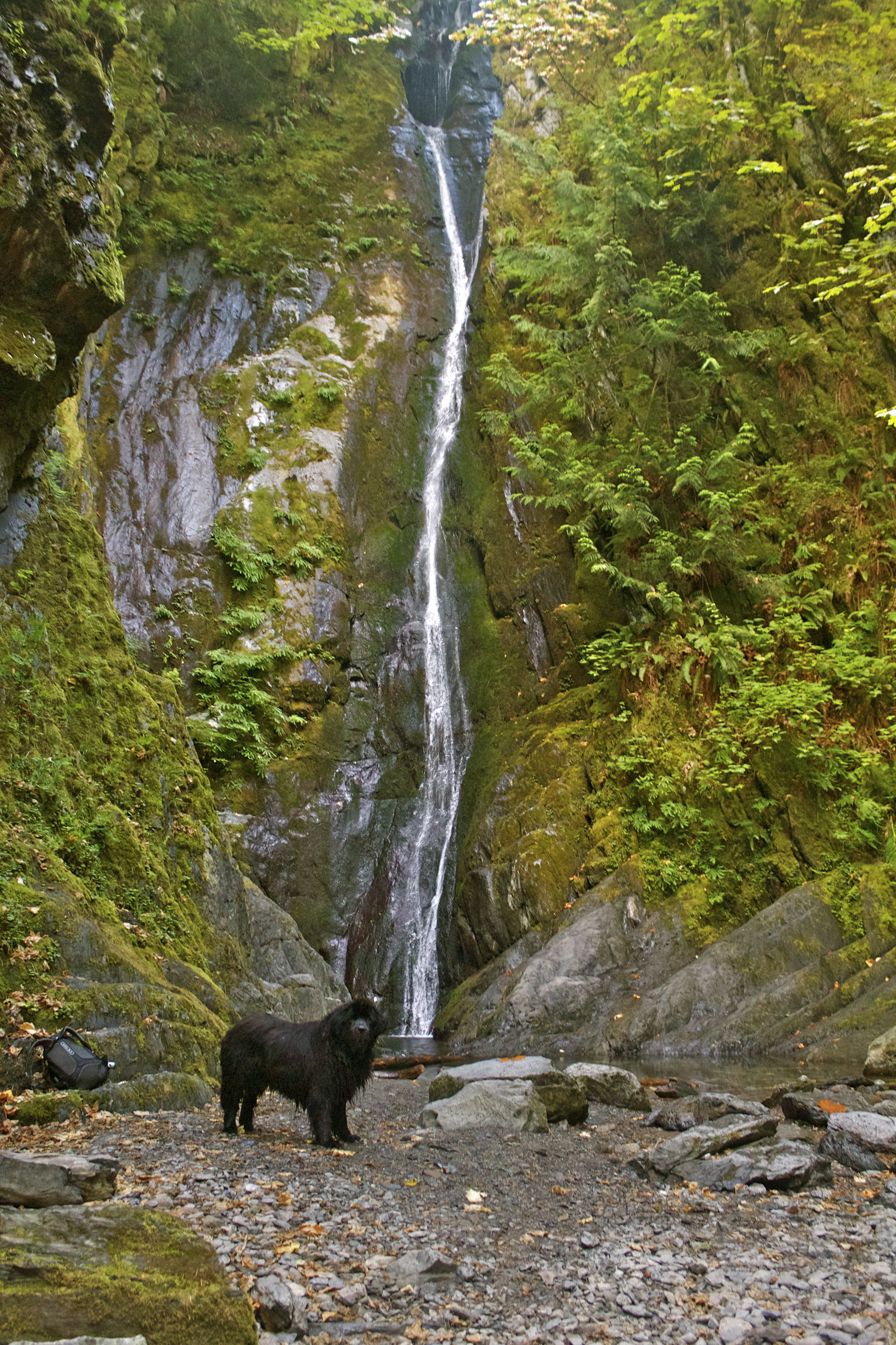 Wordless Wednesday 20 Goldstream Provincial Park Bc