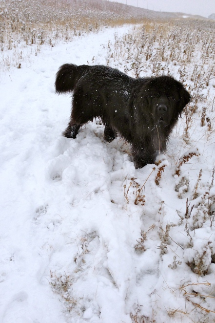 Moses romped in the snow like a younger dog