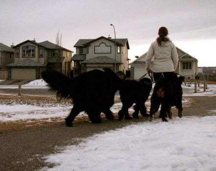 Me walking Moses, Alma, and pal Juniper. What's normal for me can be quite the sight for others.