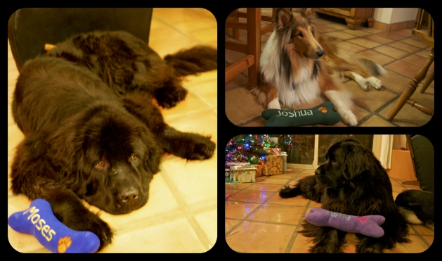 Dogs and their new toys. Moses really was happy - that's just his default face. Kind of like RBF, but for dogs.