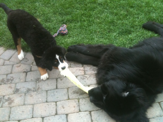 What was Moses up to in 2010? He was playing with his new friend, Juniper!