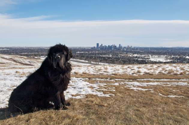 Moses at Nose Hill Park