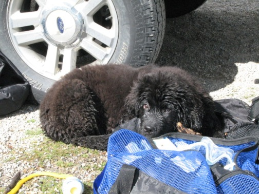 Bonus puppy Moses photo from the archives - same day as the above, curled up with our scuba gear