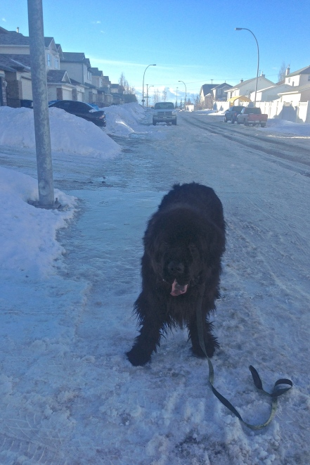 Moses dismayed at the state of neighbourhood sidewalks