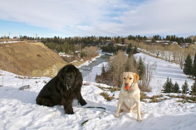 Mo & Doug