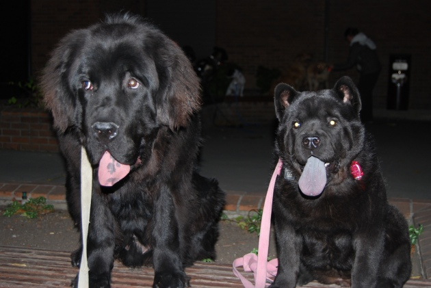 A young Moses and his female buddy Homer, back in the day in dog school