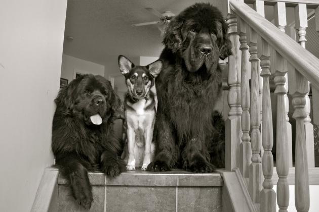 Alma, Crosby, Moses