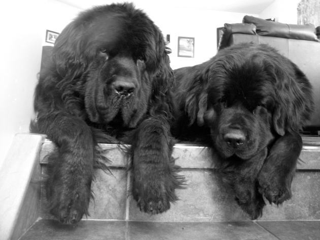 Moses & Alma