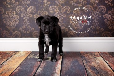 This adorable pup, Mara, is currently adoptable through ARF - Alberta Rescue Foundation