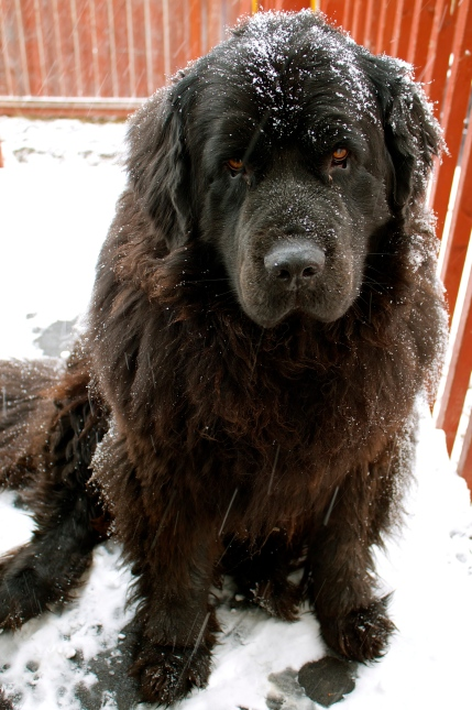 Alma enjoying the snow