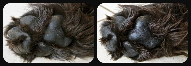 Moses' paw before and after paw butter application