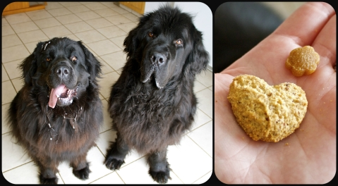 Alma and Moses - very willing product testing participants. The big treat is the , and the smaller one is the