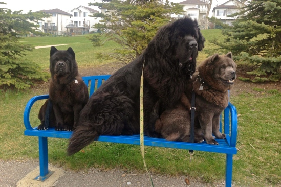 Homer, Moses, and Kimbo... I think I need to find a bigger bench