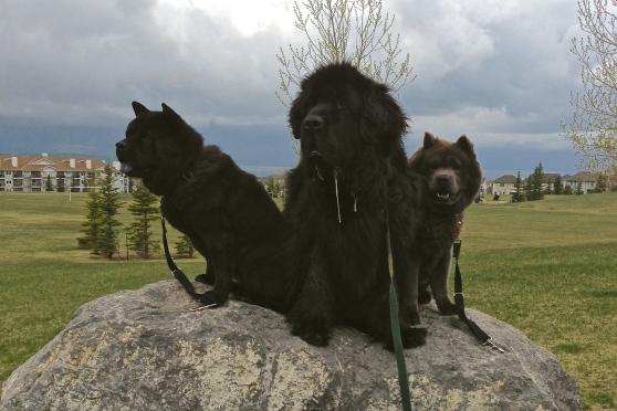 Posing for photos as storm clouds roll in